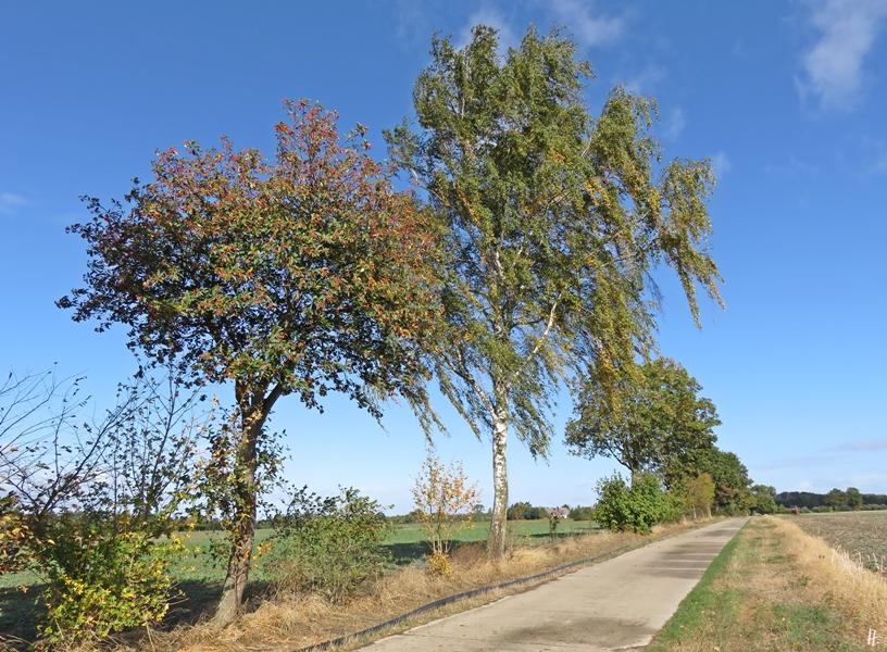 2018-09-24 b.Lüchow Spaziergang (15) Feldweg
